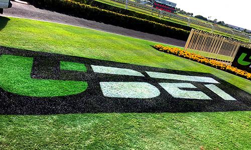 custom grass signage